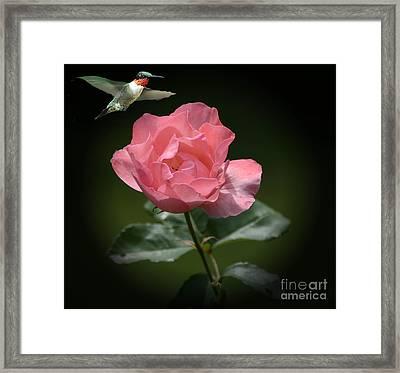 Hovering Framed Print by Arnie Goldstein