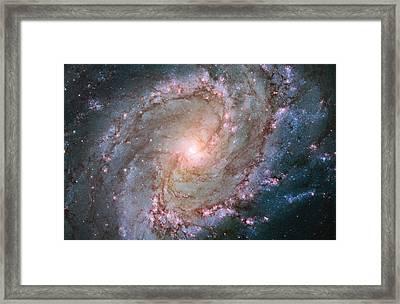 Hubble Views Stellar Genesis In The Southern Pinwheel Galaxy Framed Print by Nasa