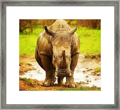 Huge South African Rhino Framed Print by Anna Om