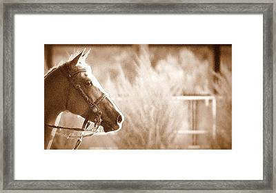 Humility Framed Print by Barbara Dudley