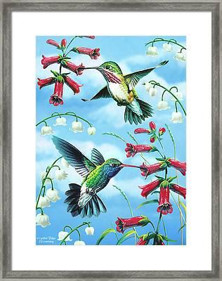 Humming Birds Framed Print by JQ Licensing