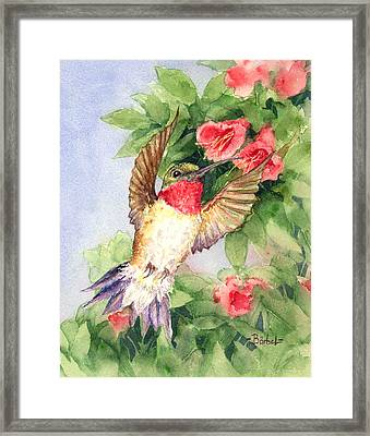 Hummingbird And Nectar Framed Print by Barbel Amos