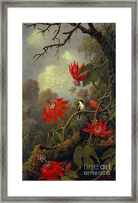 Hummingbird And Passionflowers 1877 Framed Print by Padre Art