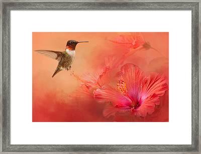 Hummingbird And Peach Hibiscus Framed Print by Jai Johnson