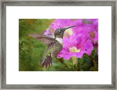 Hummingbird And Petunias Framed Print by Bonnie Barry