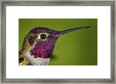 Hummingbird Head Shot With Raindrops Framed Print by William Lee
