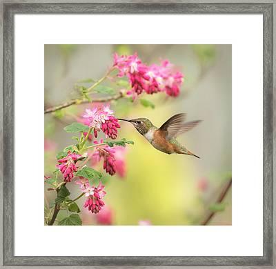 Hummingbird Heaven 2 Framed Print by Angie Vogel