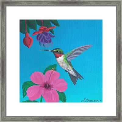 Hummingbird Heaven Framed Print by Frank Strasser