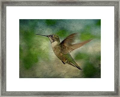 Hummingbird In Flight II Framed Print by Sandy Keeton