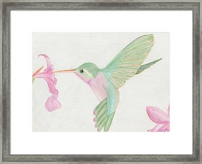 Hummingbird Framed Print by Joanna Aud