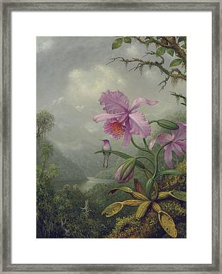 Hummingbird Perched On An Orchid Plant Framed Print by Martin Johnson Heade