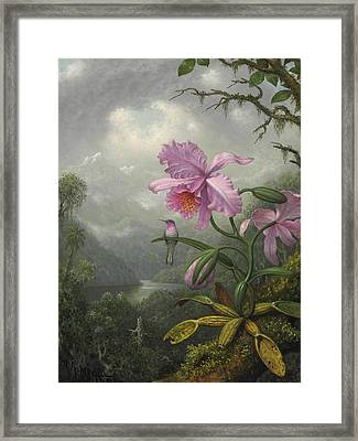 Hummingbird Perched On The Orchid Plant Framed Print by Martin Johnson Heade