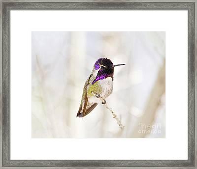 Hummingbird Framed Print by Rebecca Margraf