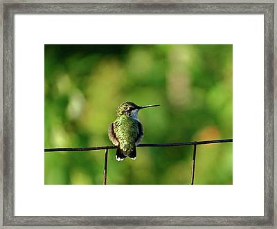Hummingbird Smiles Framed Print by Dianne Cowen