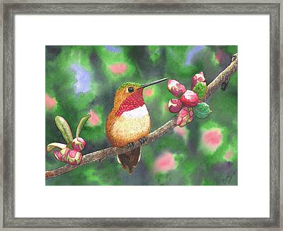 Hummy Framed Print by Catherine G McElroy
