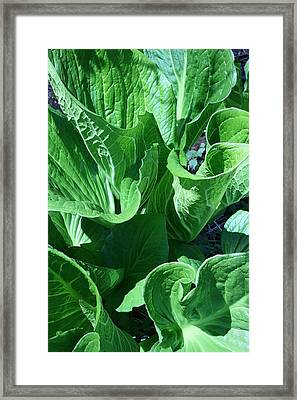 Humongous II Framed Print by William Albanese Sr