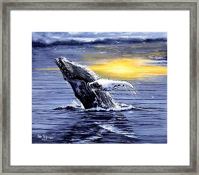 Humpback Whale Breaching Framed Print by Bob Patterson
