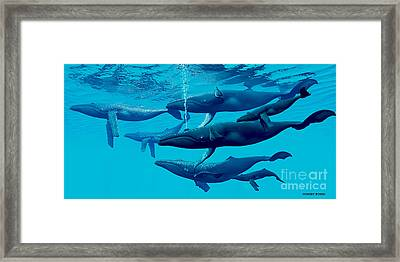 Humpback Whale Group Framed Print by Corey Ford