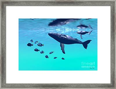 Humpback Whales Framed Print by Corey Ford
