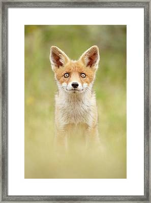 Hungry Eyes _cute Red Fox Cub Framed Print by Roeselien Raimond