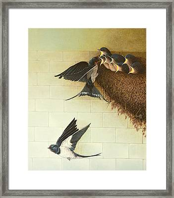 Hungry Mouths Framed Print by Pat Scott