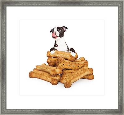 Hungry Puppy With A Pile Of Big Treats Framed Print by Susan Schmitz