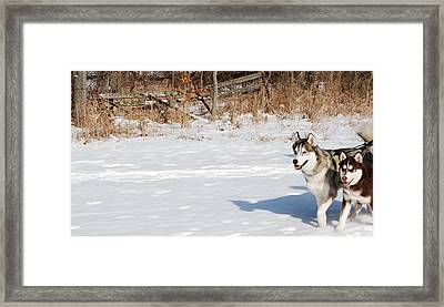 Huskies In Heaven Framed Print by Peter  McIntosh