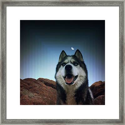 Husky Framed Print by Brennan Gallegos