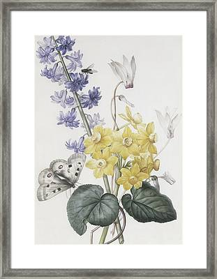Hyacinth, Cyclamen And Narcissi Framed Print by Pierre Joseph Redoute