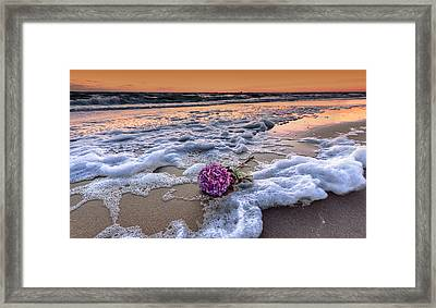 Hydrangea Washed Up On The Beach Framed Print by Alex Hiemstra