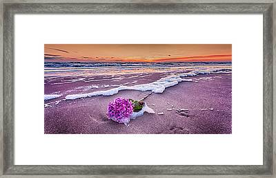 Hydrangea Washed Up On The Beach Part 2 Framed Print by Alex Hiemstra