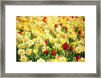 I Am Here Framed Print by Tamyra Ayles