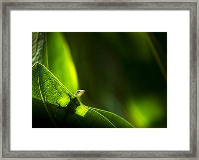 I Am Looking At You Framed Print by Marvin Spates