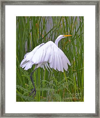 I Am Out Of Here Framed Print by Carol  Bradley