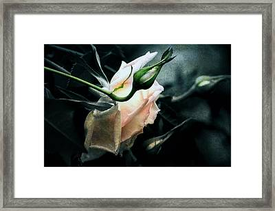 I Am Your Ghost Of A Rose Framed Print by Georgiana Romanovna