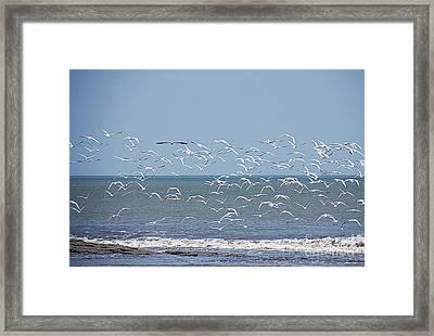 I Did It My Way Framed Print by Bob Hislop