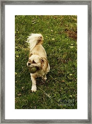 I Got It Framed Print by Cassandra Buckley