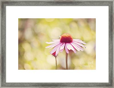 I Got Sunshine Framed Print by Beve Brown-Clark Photography