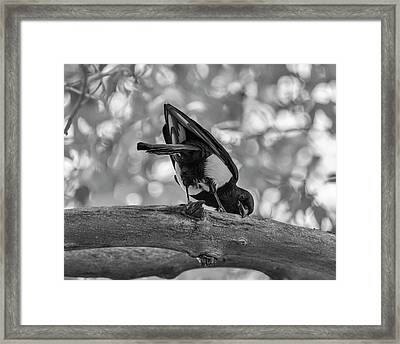 I Love This Branch Framed Print by Loree Johnson