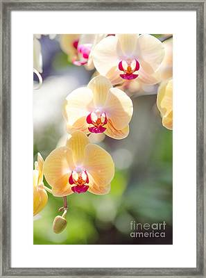 I See You Framed Print by A New Focus Photography