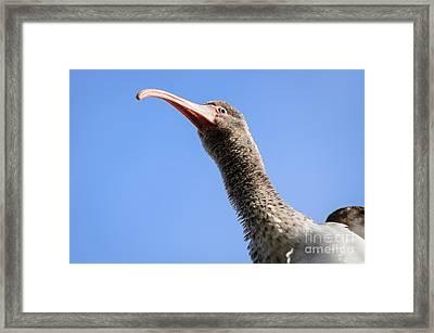 I See You Too Framed Print by Debra Martz