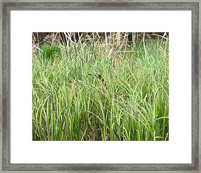 I Spy A Green Heron In Pentwater Michigan Framed Print by Jane Greiner