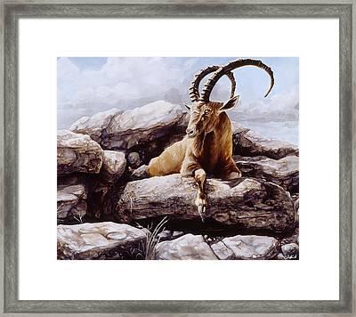 Ibex Framed Print by Steve Goad