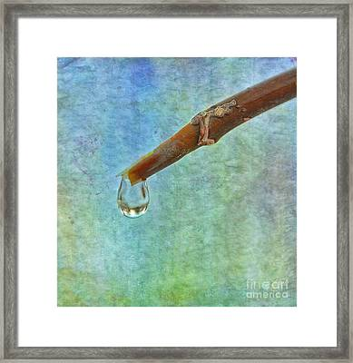 Ice Drop Oo Framed Print by SK Pfphotography