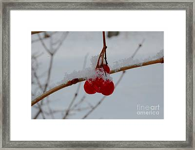 Iced Cranberry Wine Framed Print by The Stone Age