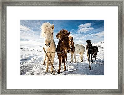 Icelandic Hair Style Framed Print by Mike Leske