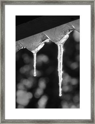 Icicles Framed Print by Wim Lanclus