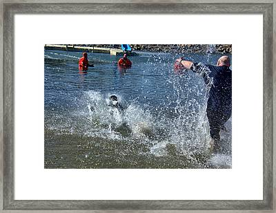 Icy Dive Framed Print by Dan Brennan