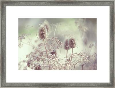 Icy Morning. Wild Grass Framed Print by Jenny Rainbow
