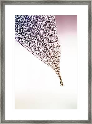 Idle Tears Framed Print by Maggie Terlecki